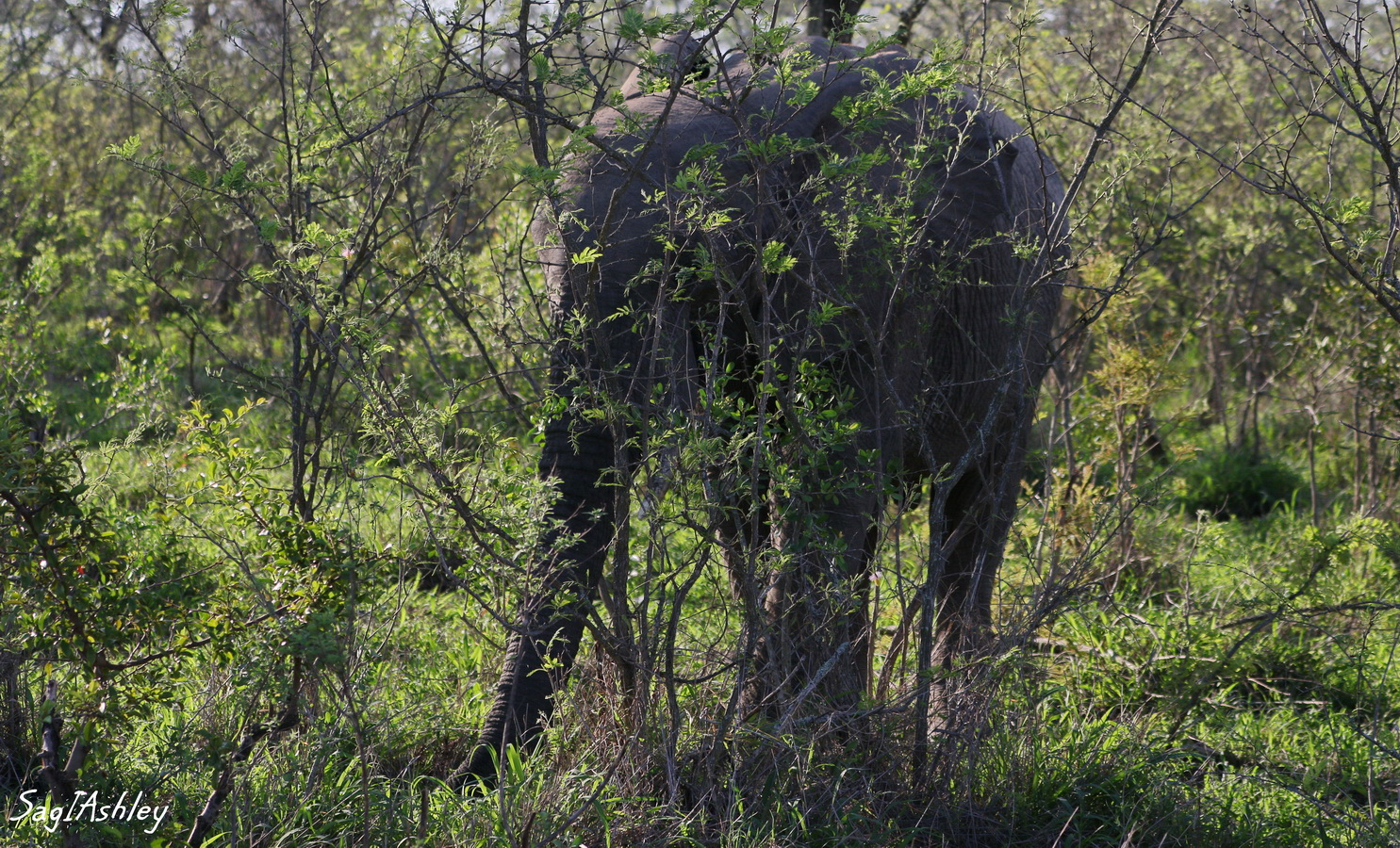 EO9A1546_GFelephant cache.jpg