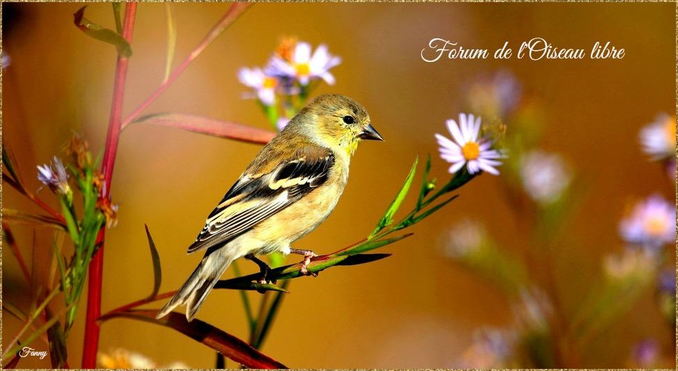 Forum de l'oiseau libre Index du Forum